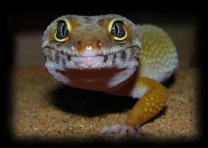 geckoad